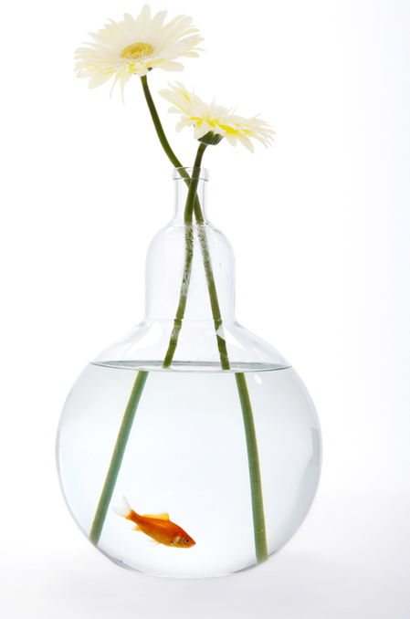 O Aquarium/Vase: For Flowers, Fish - Gizmodo, the Gadget Guide