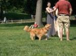 central park dog
