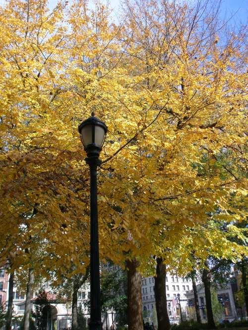 fall leaves_union square